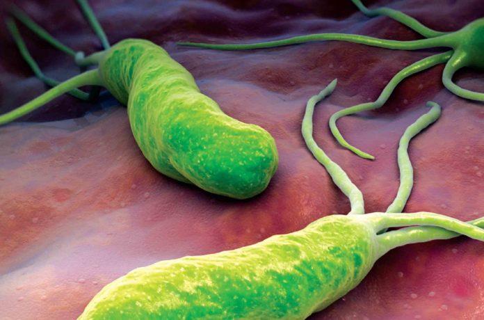Gli helicobacter pylori possono causare il tumore