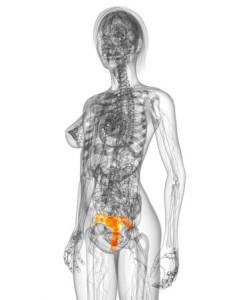HPV, come prevenire il virus silenzioso associato al carcinoma