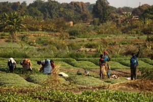"Si chiude il Simposio FAO su ""Agricultural Innovation for Family Farmers"""
