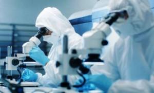 Xenobot, i microrobot fatto di cellule
