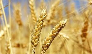 Biodiversità e sicurezza alimentare: nasce una rete EU di banche dei semi