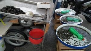 Sequestro di cozze a Napoli