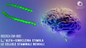 molecola con ruolo anti-invecchiamento neuroni